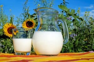 a pitcher of milk in front of a field of sunflowers